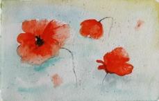poppies01