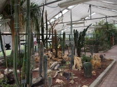 The Greenhouse in the Botanical Garden