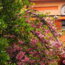 Bologna Botanical Garden
